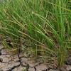 Ph gov't intensifies efforts to combat El Niño